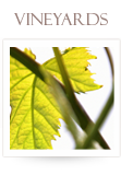 vineyardsB